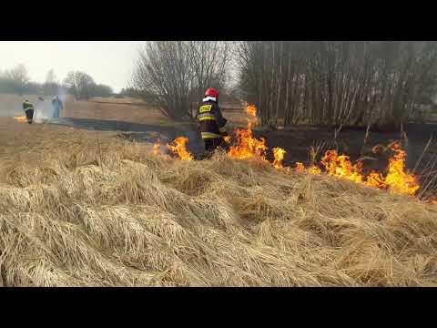 Potężny Pożar Traw I Kolizja W Gęstym Dymie Na Wołyńskiej W Koszalinie