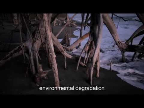 El Salvador: I live from the mangrove forest