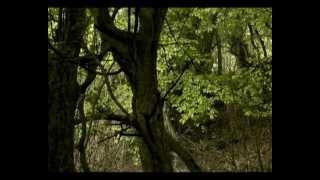 Лес из железного дерева. Гирканский национальный парк
