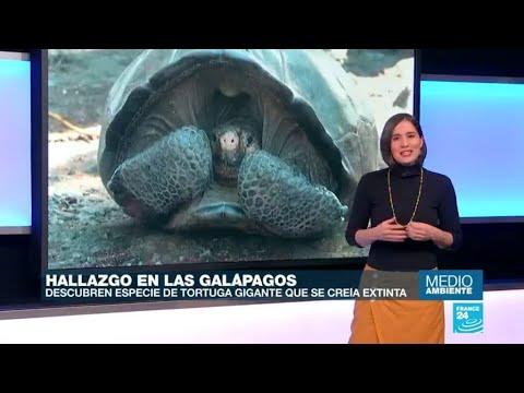 Una tortuga gigante