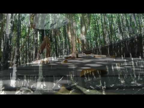 Exploring Mtunzini mangrove Swamps
