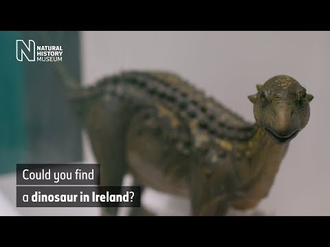 Can you find dinosaur fossils in Ireland? | Natural History Museum