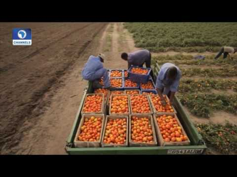 Dateline Abuja: Developing Agricultural Education Pt. 1