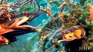Красивое видео. Жизнь в океане.