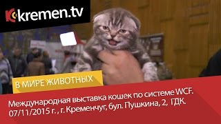 Международная выставка кошек по системе WCF, г. Кременчуг, 07.11.2015 г.