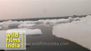 Dirty flows the Yamuna: my river is dead