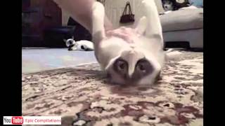 Epic Funny Cats / Cute Cats Compilation    60 minutes!! [HD][HQ]