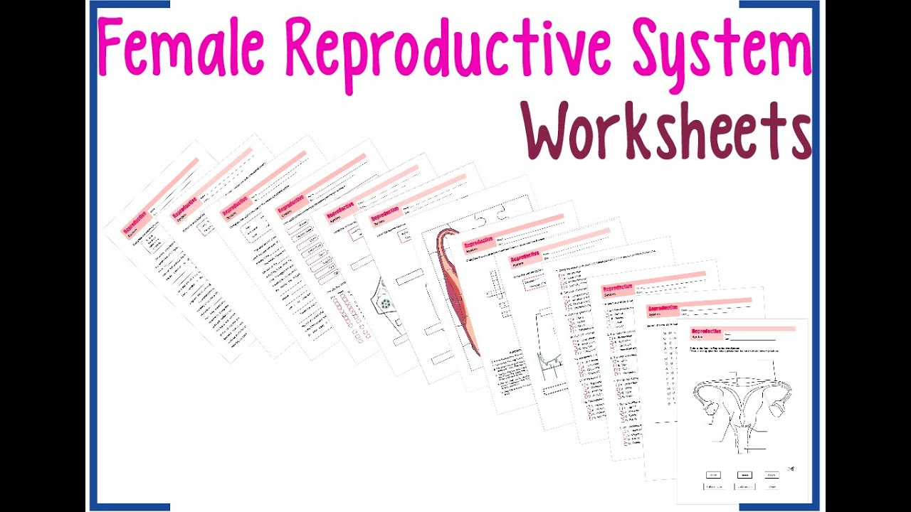 Printables Female Reproductive System Worksheet female reproductive system worksheets youtube worksheets
