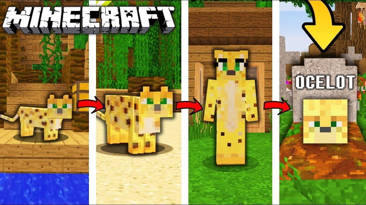 życie Ocelota W Minecraft Od Narodzin Do śmierci Youtube