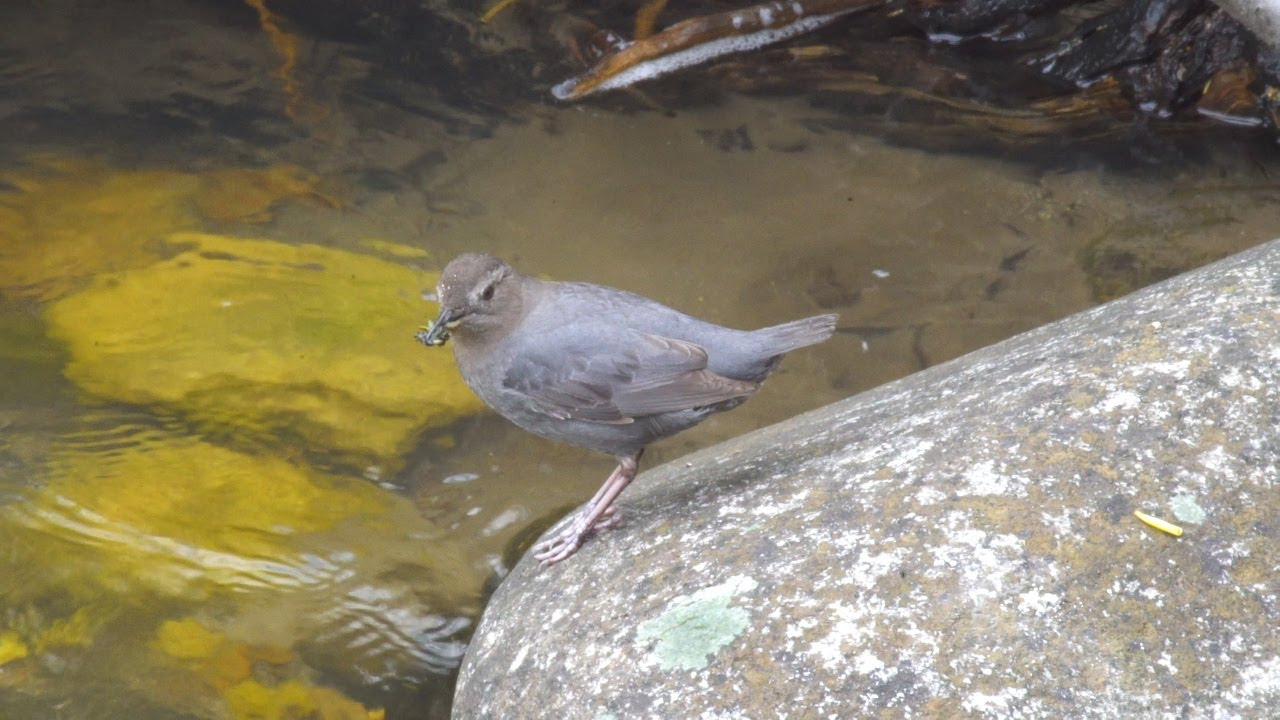 Birding in Wyoming - Our Wyoming