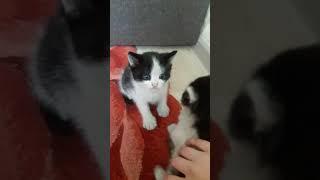 Мои котята 😘😍🐱мими