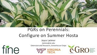 PGRs on Perennials   Configure on Summer Hosta