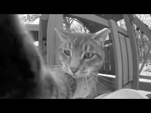 Manny The Selfie Cat 'His Name is Manny'