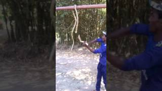 Snake Cutting and eating real video