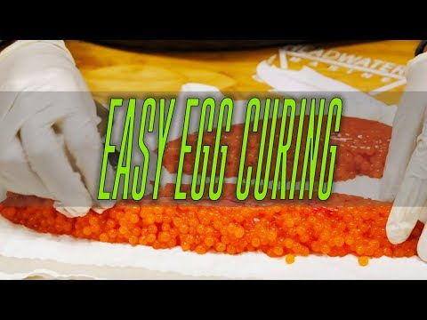 How To Cure Salmon Eggs, The Fastest & EASIEST Way To Cure Eggs.