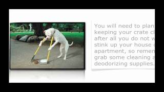 Puppy Training Schedule Method Rapidly House Break Your Dog