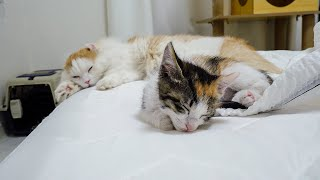These Two Siblings Cats are So Lovely Even When They Sleep