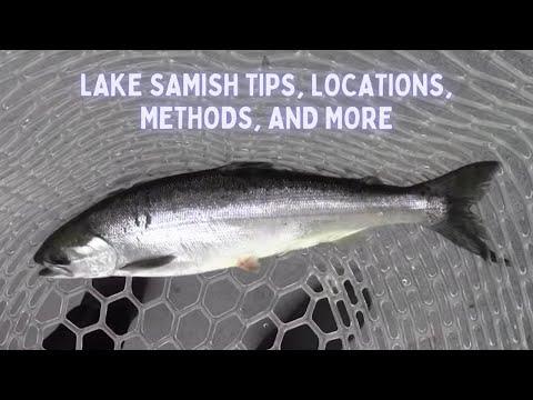 Lake Samish Spring Kokanee