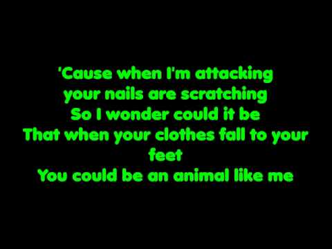 Animal - The Cab (Lyrics)