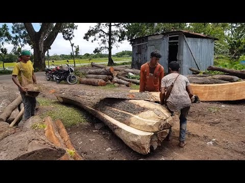 Rain Tree Best Quality Output Wood After Cutting at Sawmill।Good Quality Wood Finding।Best Type Wood
