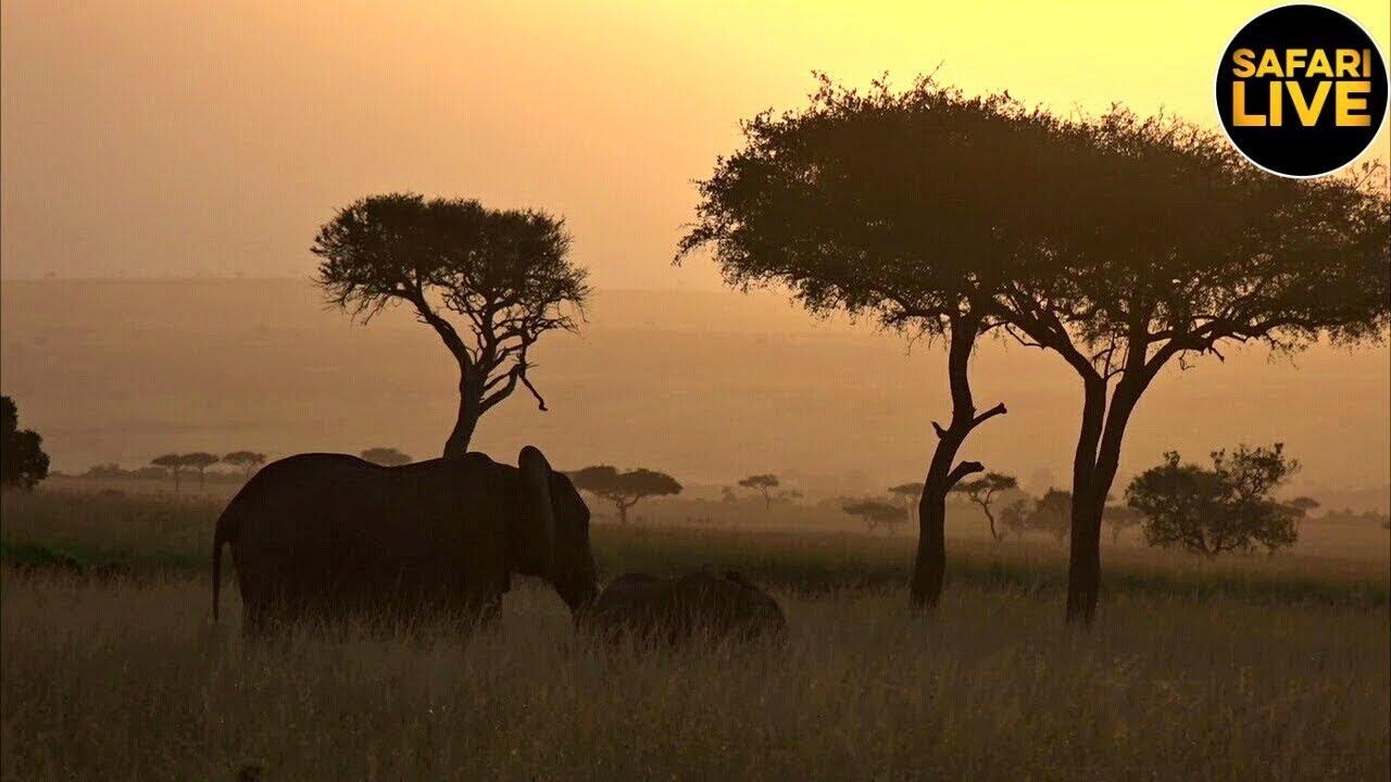 safariLIVE - Sunrise Safari - July 05, 2019 - YouTube
