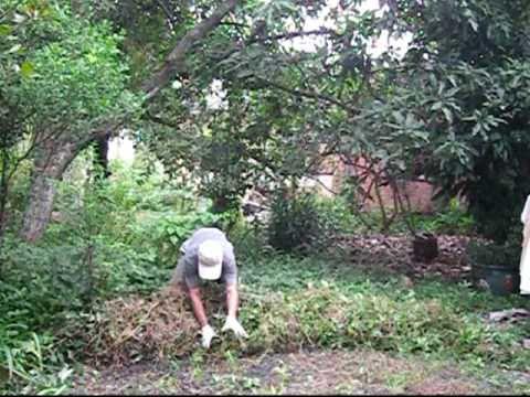 Làm cỏ sân nhà không dùng cuốc xẻng