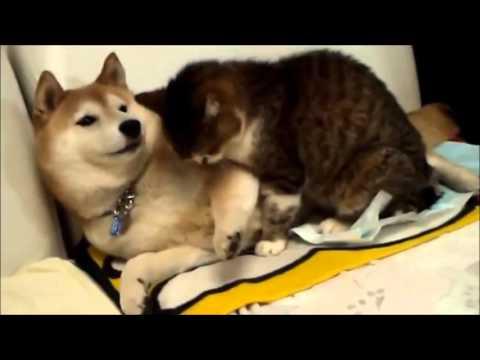 可愛い犬猫 イヌ ネコ 癒し動画