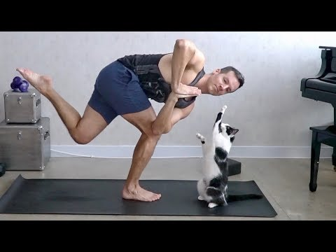 Cats Interrupting Yoga