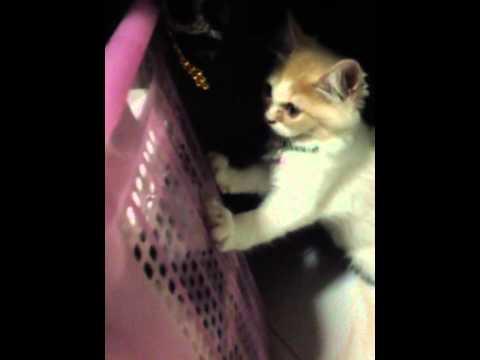 ช่วยตั้งชื่อแมวหน่อยจิ
