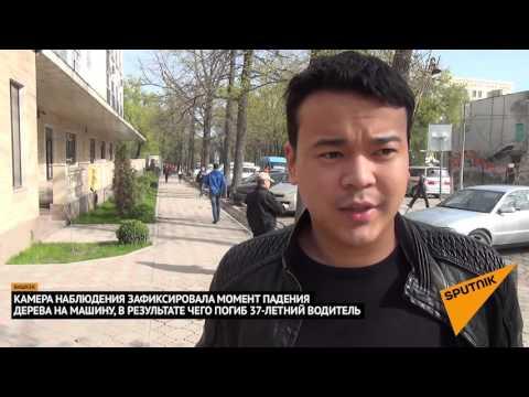 Бишкек интим услуги индивидуалки
