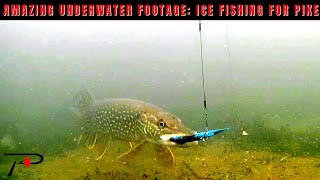 Amazing Underwater Footage Ice Fishing For Pike