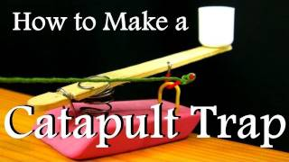 How to Make a Catapult Trap From Office Supplies