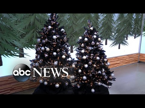 black christmas trees are hottest trend in holiday decorations but why the morning breeze 981 the breeze