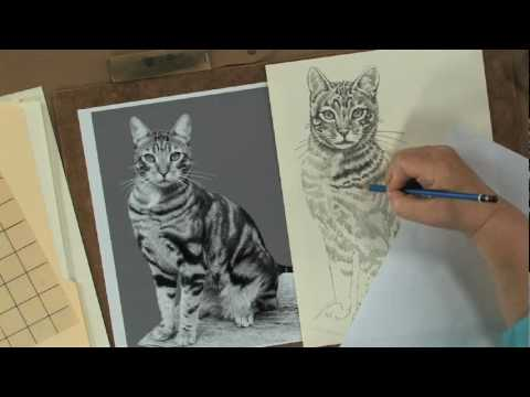 Preview keys to drawing realistic animals with claudia nice