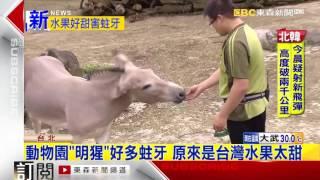 動物明星好多蛀牙 原來是…台灣水果太甜了