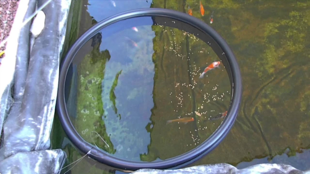 Diy teach your fish where to eat youtube for Fish feeding ring