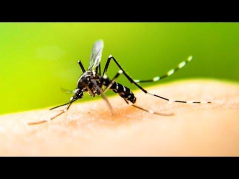 Могут ли комары быть переносчиками коронавирусной инфекции? | Доктор Мясников