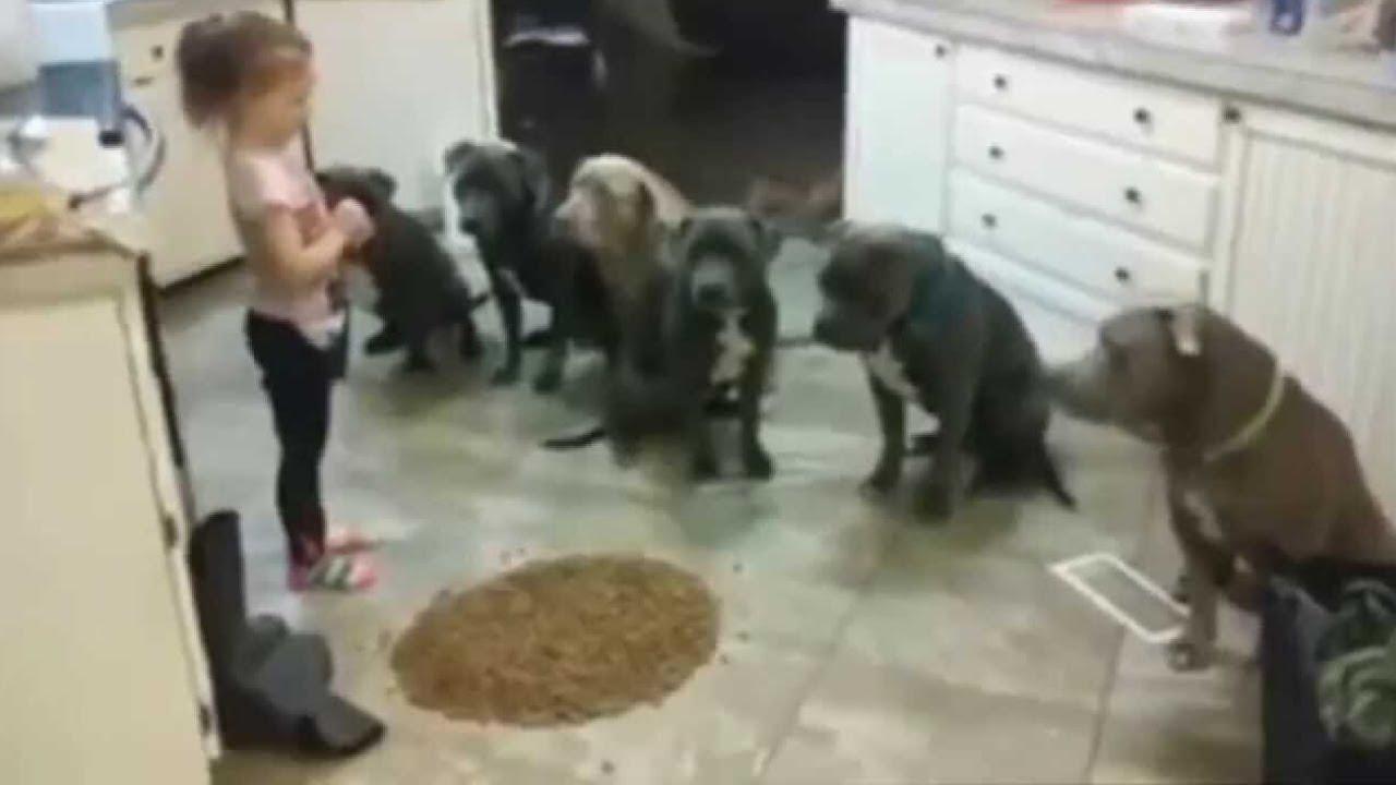 Ils Ont Laissé une Fille Seule avec Six Pitbulls. Ce Qu'ils Ont Fait la Nuit Était Incroyable