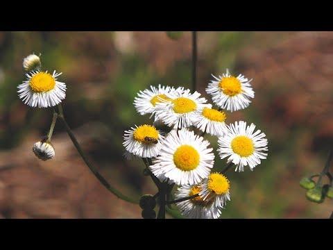 LaCosta Urban Wetlands 4K Nature Video   Shot On Sony FDR AX100