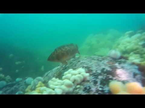 St Abbs Scotland, a very fishy dive