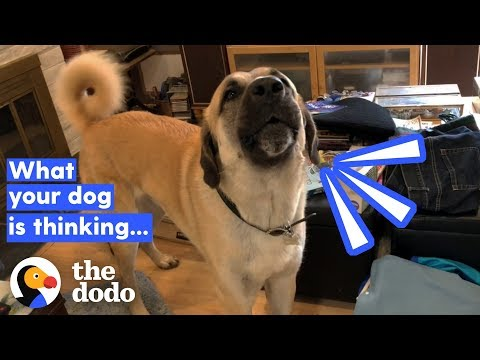 How To Tell If Your Dog's Happy (It Has Nothing To Do With His Tail) | The Dodo