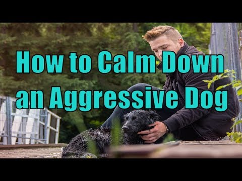 how-to-calm-down-a-dog-showing-aggression-towards-people-,-aggressive-dog-training,-doggy-dan