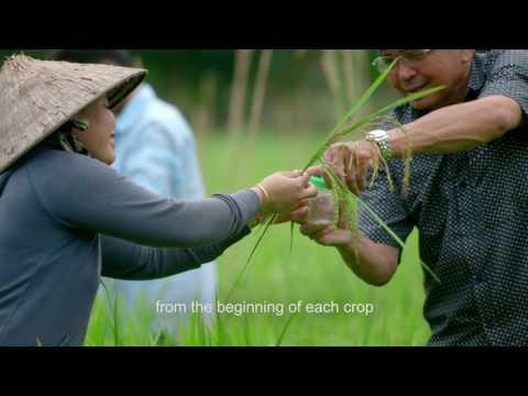 Training Vietnamese Rice Farmers