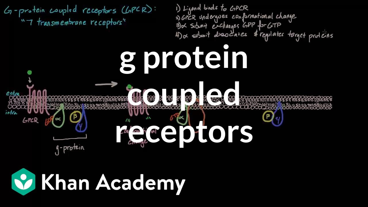 G Protein Coupled Receptors (video) | Khan Academy