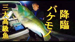 【大物】波1.2mのベタ凪!初めてのポイントで三大高級魚を仕留める!