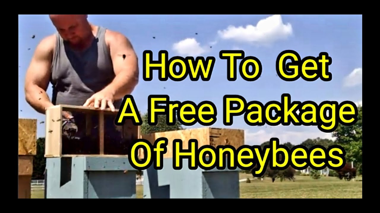 How To Get A Free Package Of Honeybees