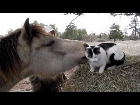 Thumbnail for Cat Video Pony Grooms Cat