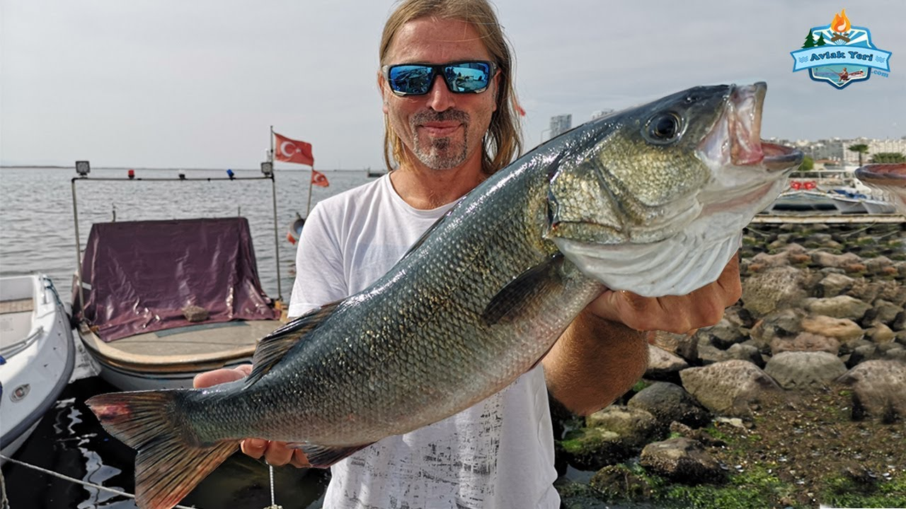 İSKELE'DE DEV LEVREKLER!! Spin ile Rekor Balıklar Yakaladık!! Hangi Sahte, Hangi Takım?