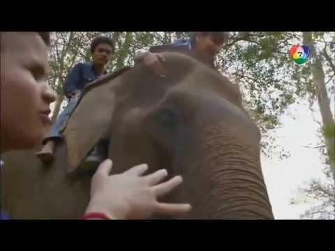สารคดีช้างไทย ตอนครูช้าง คลิป 1