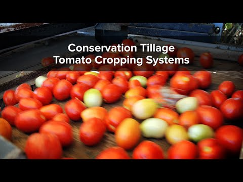 Conservation Tillage Tomato Cropping Systems